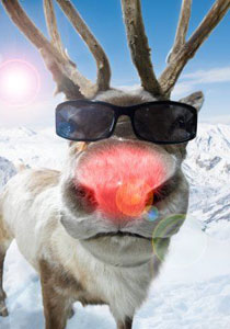 rudolph-red-nose-reindeer-3